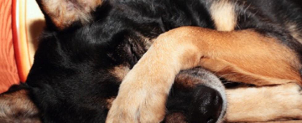 Apprendre des tours à votre chien