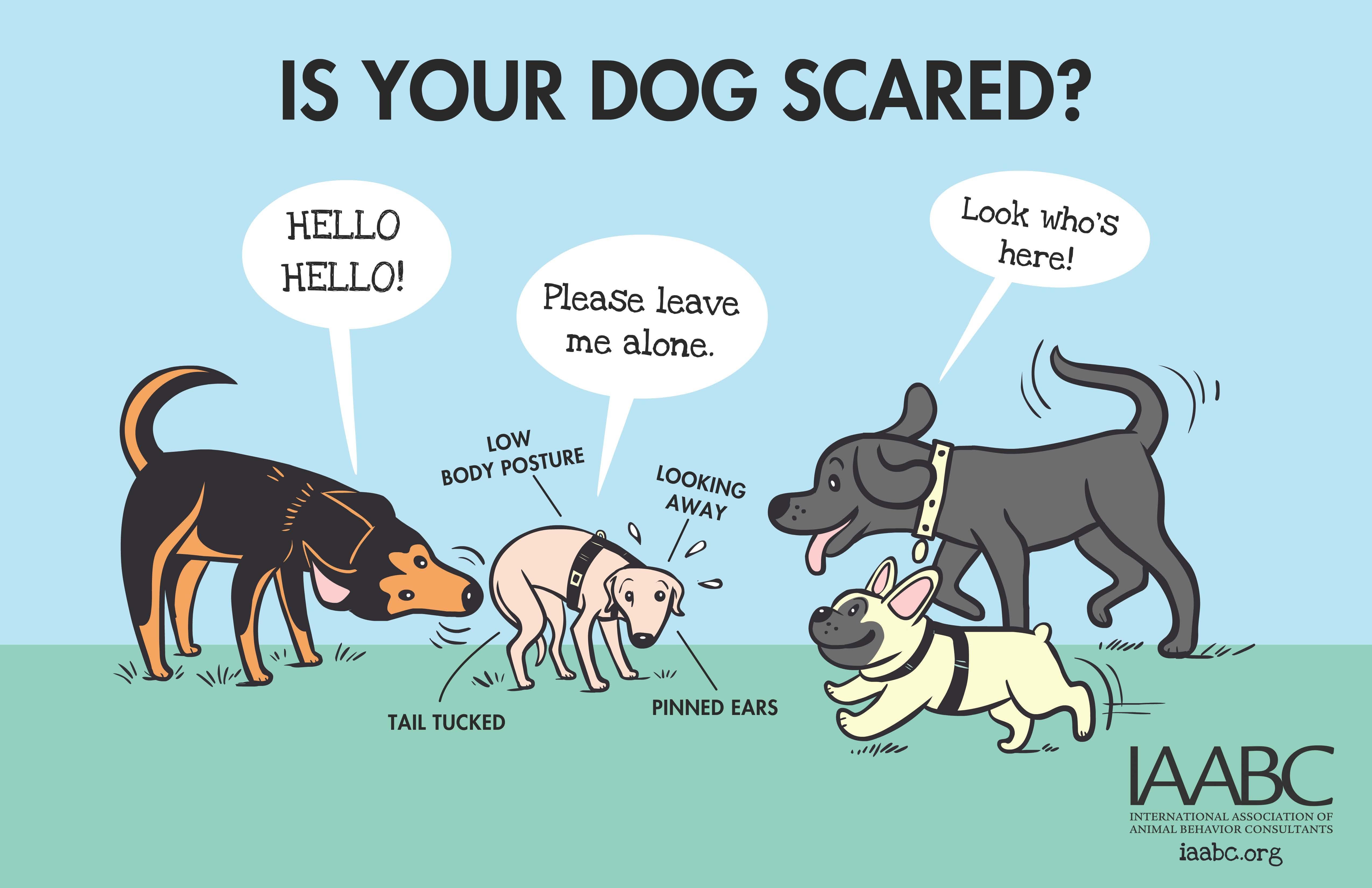 comportementaliste-canin-var